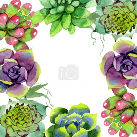 Amazing succulents. Watercolor background illustration. Floral square frame. Aquarelle hand drawing succulent plants.