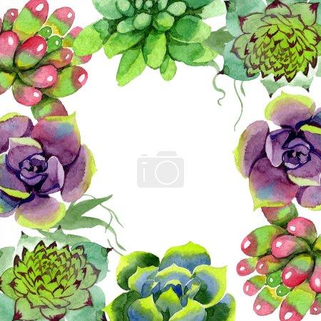 Photo pour Plantes succulentes incroyables. Illustration de fond aquarelle. Cadre carré floral. Main d'aquarelle dessin plantes succulentes - image libre de droit