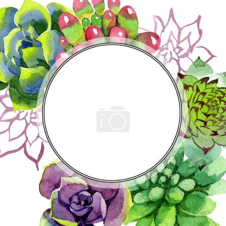Photo pour Plantes succulentes incroyables. Illustration de fond aquarelle. Ornement de bordure cadre rond. Main d'aquarelle dessin plantes succulentes. - image libre de droit