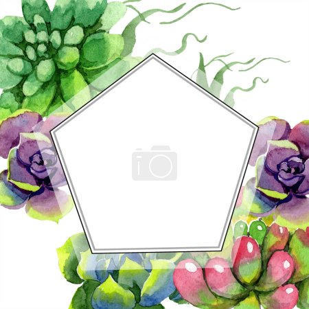 Amazing succulents. Watercolor background illustration. Geometric frame. Aquarelle hand drawing succulent plants.