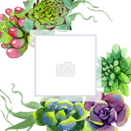 Amazing succulents. Watercolor background illustration. Frame border ornament square. Aquarelle hand drawing succulent plants.