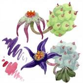 """Постер, картина, фотообои """"Duvalia цветы изолированных иллюстрация элементы. Акварель фон иллюстрации. Акварель руку Рисование изолированных суккулентных растений и пятна"""""""