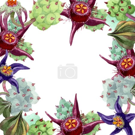 Duvalia flowers. Watercolor background illustration. Floral square frame. Aquarelle hand drawing succulent plants.