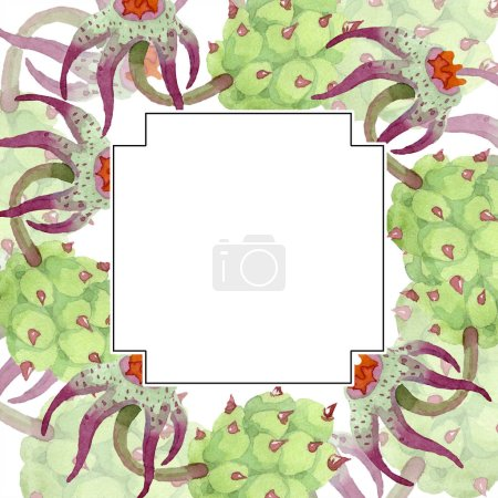 Duvalia flowers. Watercolor background illustration. Geometric frame square. Aquarelle hand drawing succulent.