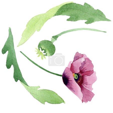 Photo pour Belle fleur de pavot bordeaux isolée sur blanc. Illustration de fond aquarelle. Dessin aquarelle mode aquarelle isolé coquelicot élément d'illustration . - image libre de droit