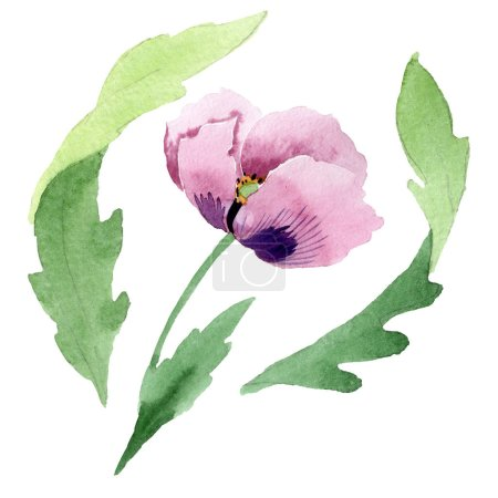 Photo for Beautiful burgundy poppy flower isolated on white. Watercolor background illustration. Watercolour drawing fashion aquarelle isolated poppy illustration element. - Royalty Free Image
