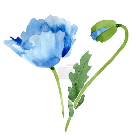 Photo for Beautiful blue poppy flower and bud isolated on white. Watercolor background illustration. Watercolour drawing fashion aquarelle isolated poppy illustration element. - Royalty Free Image