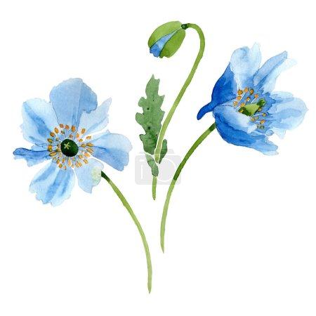 Foto de Hermosas flores amapolas azul aislados en blanco. Ilustración de fondo de acuarela. Elemento de moda aquarelle flores amapola aislados ilustración de dibujo de acuarela - Imagen libre de derechos