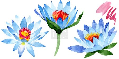 Beautiful blue lotus flowers isolated on white. Watercolor background illustration. Watercolour drawing fashion aquarelle isolated lotus flowers illustration element.