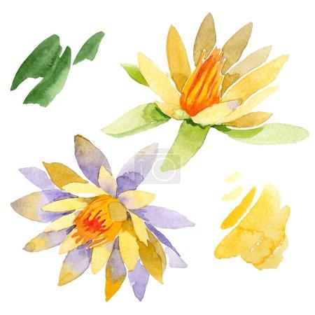 Photo pour Fleurs de lotus jaune isolés sur blanc. Illustration de fond aquarelle. Aquarelle dessin mode aquarelle isolé lotus fleurs illustration élément - image libre de droit