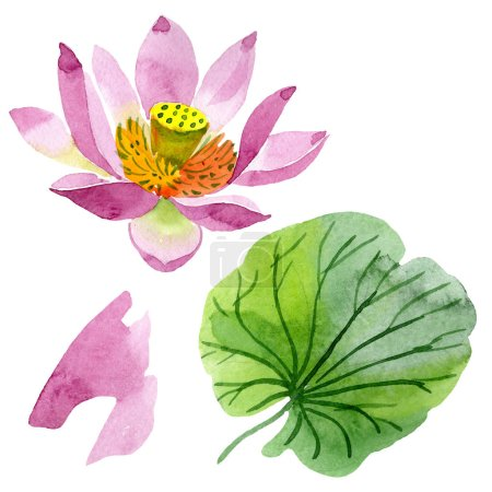 Photo pour Fleur de lotus pourpre belle isolé sur blanc. Illustration de fond aquarelle. Aquarelle dessin mode aquarelle isolé lotus fleur illustration élément - image libre de droit