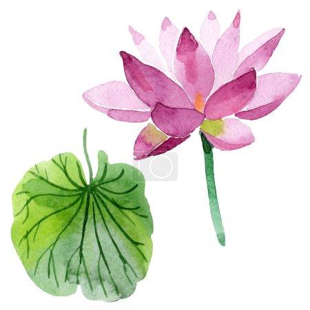 Photo pour Belle fleur de lotus violet isolé sur blanc. Illustration de fond aquarelle. Aquarelle dessin mode isolée fleur de lotus élément illustration - image libre de droit