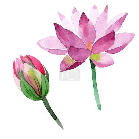 Photo pour Fleurs de lotus pourpre belle isolés sur blanc. Illustration de fond aquarelle. Aquarelle dessin mode aquarelle isolé lotus fleurs illustration élément - image libre de droit