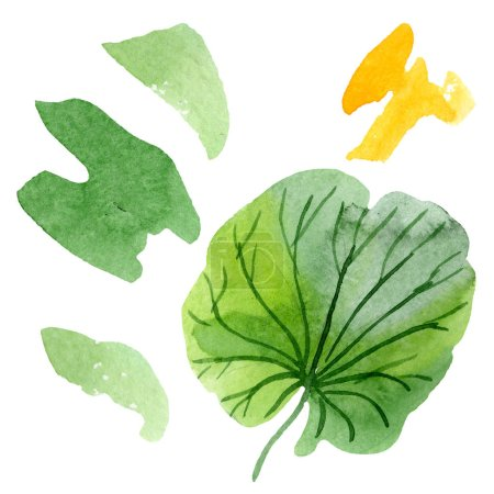 Beautiful green lotus leaf isolated on white. Watercolor background illustration. Watercolour drawing fashion aquarelle isolated illustration element