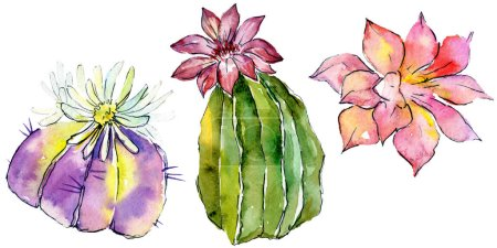 Beautiful green cactuses isolated on white. Watercolor background illustration. Watercolour drawing fashion aquarelle isolated cacti illustration elements.
