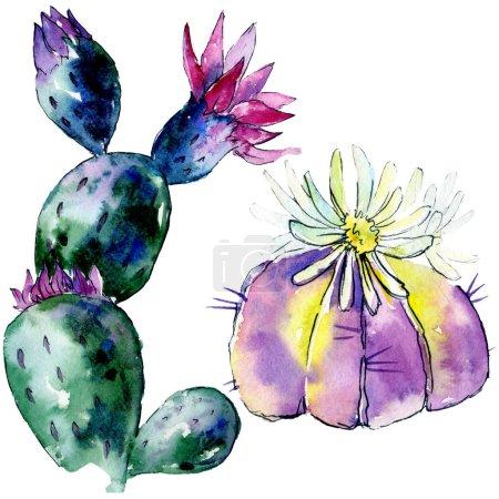 Foto de Hermoso cactus verdes aislados en blanco. Ilustración de fondo de acuarela. Acuarela Dibujo Acuarela moda aislados elementos de ilustración de cactus - Imagen libre de derechos