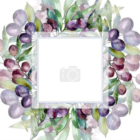 Black olives on branches with green leaves. Botanical garden floral foliage. Watercolor illustration on white background. Square frame.