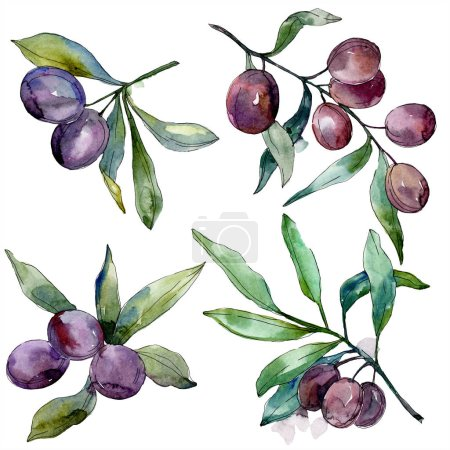 Photo for Olives on branches with green leaves. Botanical garden floral foliage. Isolated olives illustration element. Watercolor background illustration. - Royalty Free Image