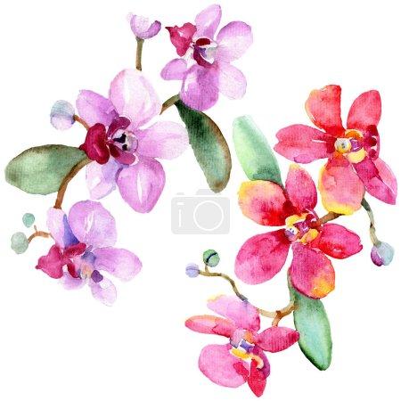 Foto de Hermosas flores de orquídea con hojas verdes aisladas en blanco. Ilustración de fondo de acuarela. Aquarelle de moda dibujo de acuarela. Elemento de ilustración aislada de orquídeas. - Imagen libre de derechos