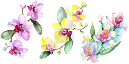 Photo pour Belles fleurs d'orchidées avec des feuilles vert isolés sur blanc. Illustration de fond aquarelle. Dessin aquarelle de mode aquarelle. Élément d'illustration isolé orchidées - image libre de droit