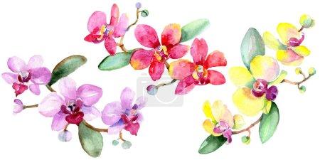Foto de Hermosas flores de orquídea con hojas verdes aisladas en blanco. Ilustración de fondo de acuarela. Aquarelle de moda dibujo de acuarela. Elemento de ilustración aislada de orquídeas - Imagen libre de derechos