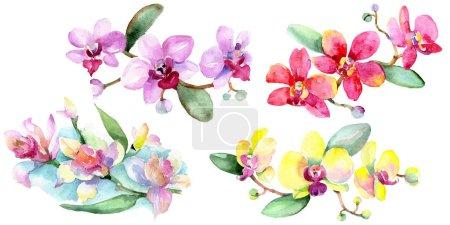 Photo pour Belles fleurs d'orchidée avec des feuilles vertes isolées sur blanc. Illustration de fond aquarelle. Aquarelle dessin mode aquarelle. Élément d'illustration d'orchidées isolées . - image libre de droit