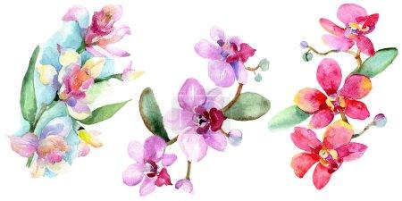 Photo pour Belles fleurs d'orchidées avec des feuilles vert isolés sur blanc. Illustration de fond aquarelle. Dessin aquarelle de mode aquarelle. Élément d'illustration isolé orchidées. - image libre de droit