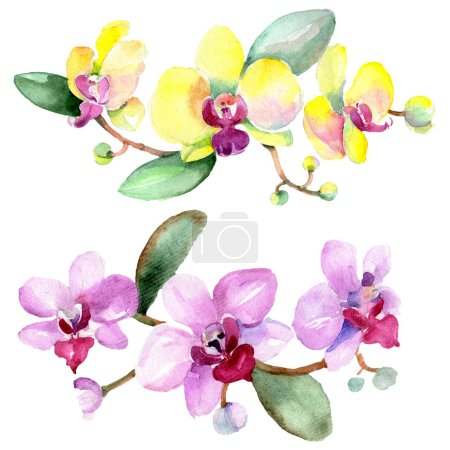 Beautiful orchid flowers with green leaves isolated on white. Watercolor background illustration. Watercolour drawing fashion aquarelle. Isolated orchids illustration element.