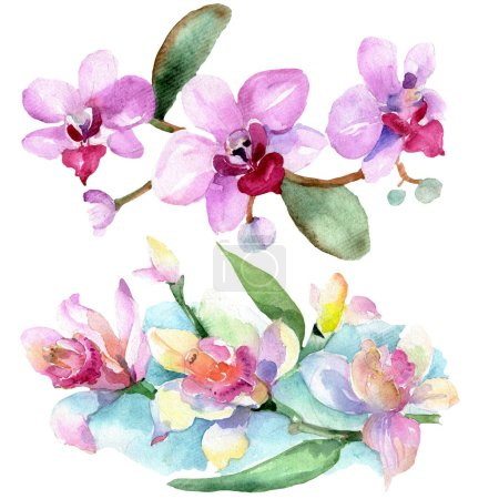 Photo for Beautiful orchid flowers with green leaves isolated on white. Watercolor background illustration. Watercolour drawing fashion aquarelle. Isolated orchids illustration element. - Royalty Free Image
