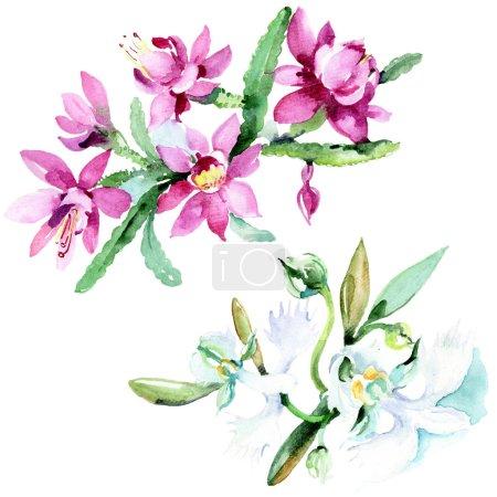 Photo pour Belles fleurs aquarelle sur fond blanc. Aquarelle dessin aquarelle illustration. Bouquet isolé de fleurs élément d'illustration . - image libre de droit