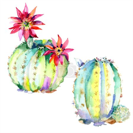 Photo for Green cactuses with flowers. Watercolour drawing fashion aquarelle isolated. Isolated cacti illustration element. - Royalty Free Image