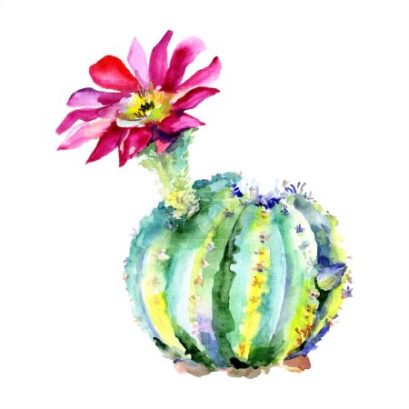 Photo for Green cactus with pink flower. Watercolour drawing fashion aquarelle isolated. Isolated cacti illustration element. - Royalty Free Image