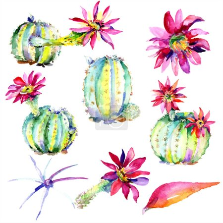 Green cacti with pink flowers. Watercolor illustration set.