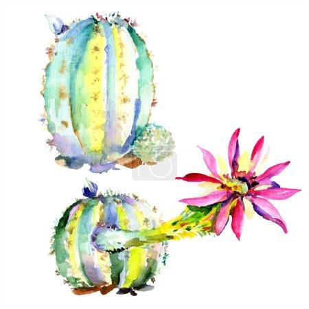 Photo pour Cactus verts avec illustration aquarelle isolée de fleurs sauvages - image libre de droit