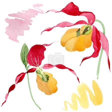 Photo for Lady slipper orchids watercolor illustration set isolated on white - Royalty Free Image