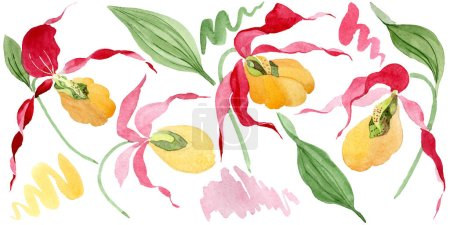 lady slipper orchids watercolor illustration set isolated on white