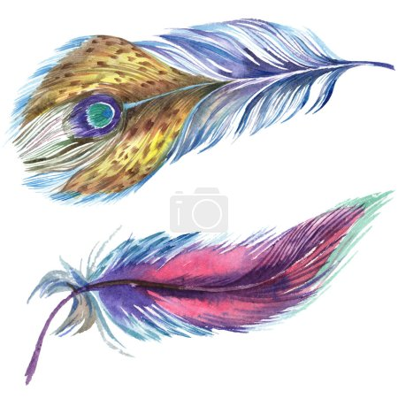 Photo for Colorful watercolor feathers isolated on white illustration elements. - Royalty Free Image