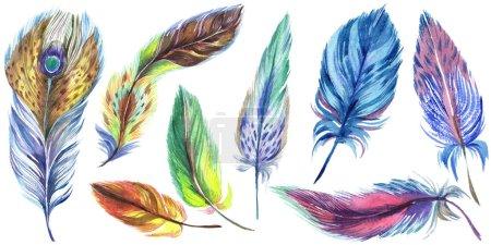 Photo pour Plumes aquarelle colorées isolées sur un ensemble d'illustrations blanches . - image libre de droit