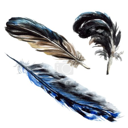 Photo for Black feathers watercolor drawing. Isolated illustration elements. - Royalty Free Image