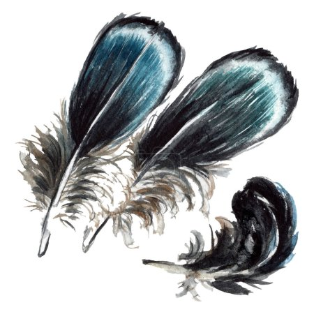 Photo pour Plumes noires dessin à l'aquarelle. Eléments d'illustration isolés . - image libre de droit