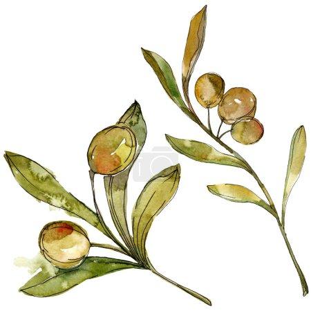 Photo pour Olives vertes aquarelle fond illustration ensemble. Aquarelle de mode dessin aquarelle isolé. Élément d'illustration isolé olives. - image libre de droit