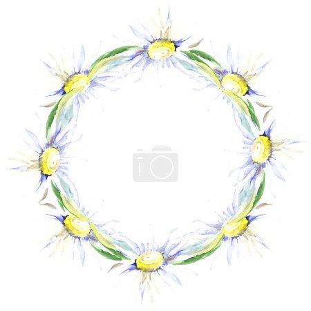 Photo pour Cadre avec fleurs de Marguerite. Aquarelle de fond illustration ensemble. Dessin aquarelle de mode aquarelle isolé. - image libre de droit