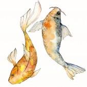 """Постер, картина, фотообои """"Набор акварели водной подводный разноцветных тропических рыб. Красное море и экзотических рыб внутри: Золотая рыбка. «Акварель» элементы для фона, текстуры. Изолированные goldenfish иллюстрации элемент"""""""
