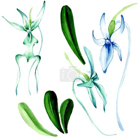 Photo for Blue Rare orchid. Floral botanical flower. Wild spring leaf wildflower. Watercolor background illustration set. Watercolour drawing fashion aquarelle isolated. Isolated orchid illustration element. - Royalty Free Image