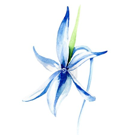 Photo pour Orchidée Rare bleue. Fleur botanique floral. Wildflower de feuille de printemps sauvage. Aquarelle de fond illustration ensemble. Aquarelle de mode dessin aquarelle isolé. Élément isolé illustration orchidée. - image libre de droit
