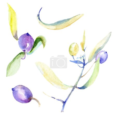 Photo for Olives watercolor background illustration set. Isolated olives with leaves illustration elements. - Royalty Free Image