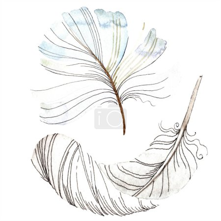 White bird feather from wing isolated. Aquarelle feather for background, texture. Watercolor background illustration set. Watercolour drawing fashion aquarelle isolated.