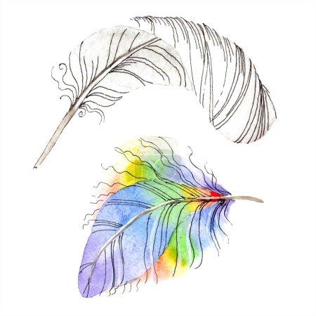 Photo pour Plume d'oiseau colorée de l'aile isolée. Plumes Aquarelle pour fond, texture. Ensemble d'illustration de fond aquarelle. Aquarelle dessin mode aquarelle isolé . - image libre de droit