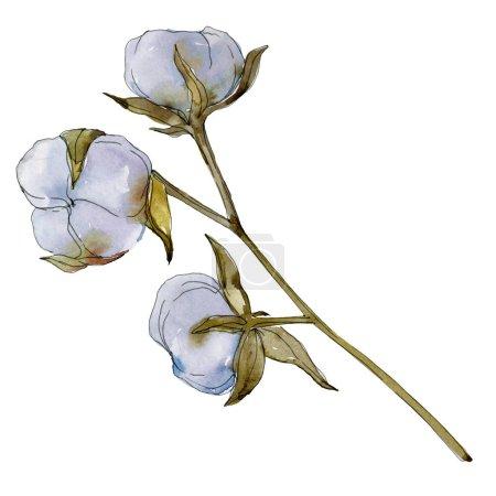 Photo pour Fleur botanique florale en coton blanc. Feuille de printemps sauvage fleur sauvage. Ensemble d'illustration de fond aquarelle. Aquarelle dessin mode aquarelle isolé. Elément d'illustration en coton isolé . - image libre de droit