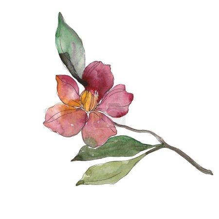 Photo pour Camélia rouge et violet isolé sur blanc. Aquarelle fond illustration élément . - image libre de droit